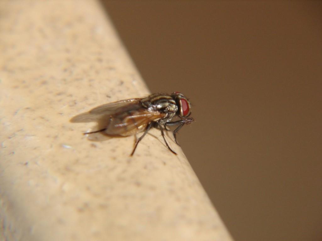 Czym odstraszyć komary