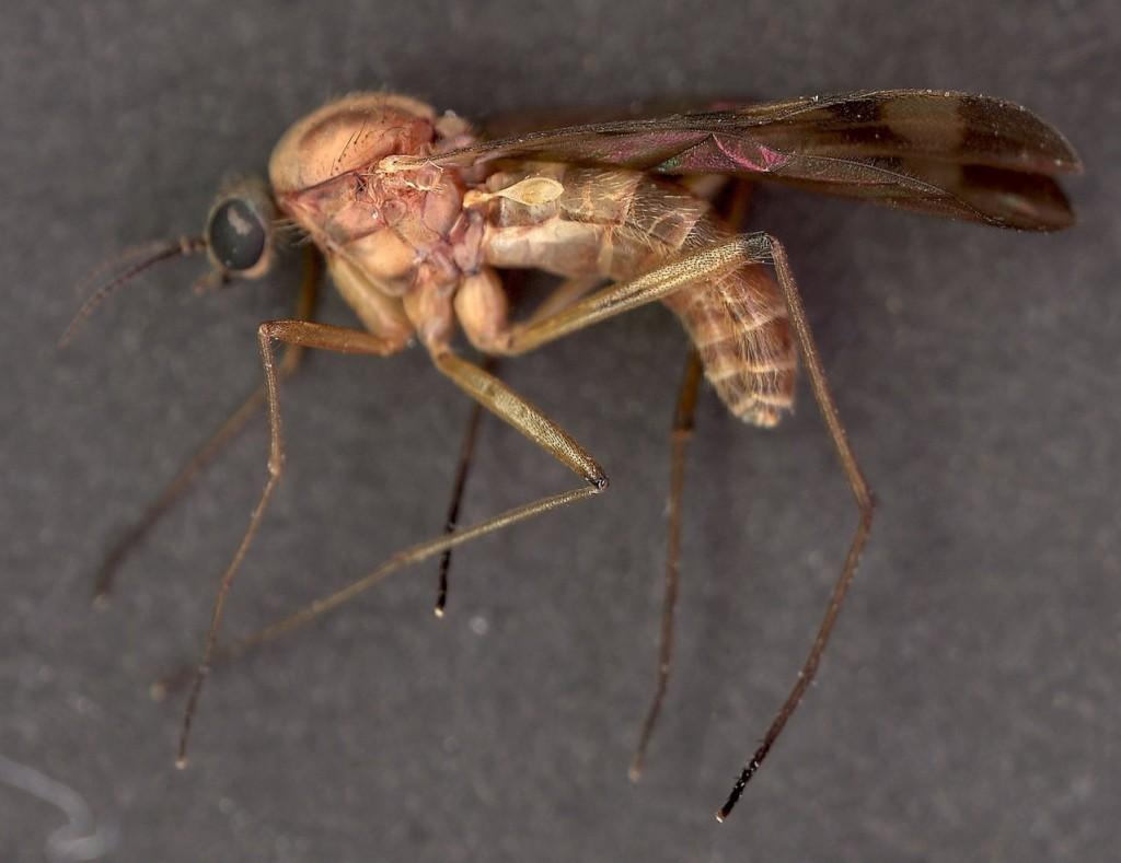 Obrona przed malarią