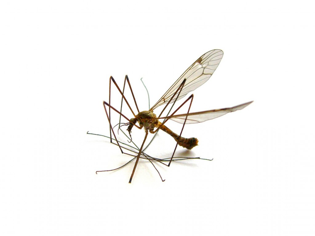 Malaria wciąż groźna